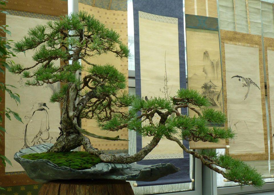 Drzewa I Krzewy W Sztuce Bonsai Urząd Miasta łodzi