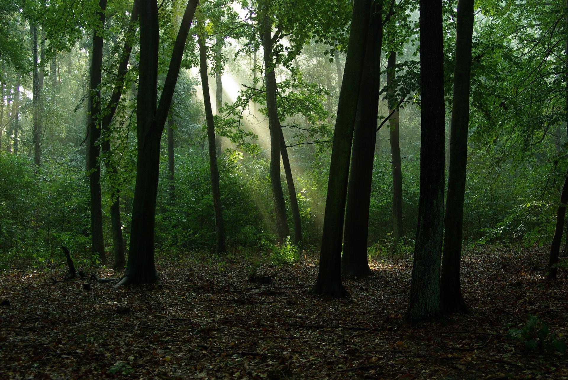 Droga w lesie - 1 part 2
